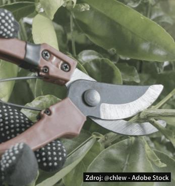 Как поддържате градинските ножици?